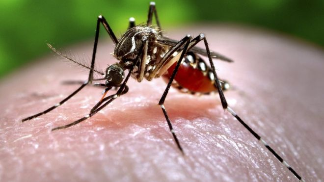 Tourist Asks About Zika in Honduras