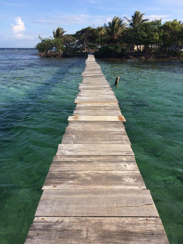 Mangrove Tour, Roatan Honduras